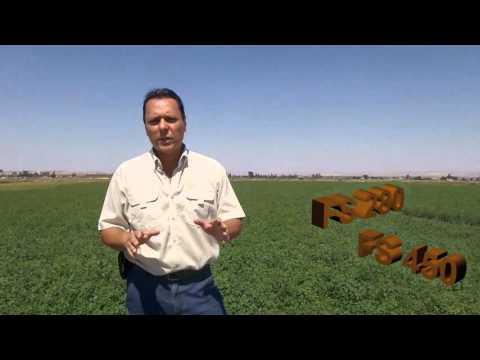 Corte y Cosecha de alfalfa con Motoguadaña o Desbrozadora Stihl.