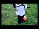 Desbrozadora de juguete STIHL – Urbaplant