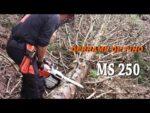Derrame de pino | Motosierra Stihl MS 250
