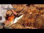 Motosierra stihl 380- como cortar con una motosierra stihl 380 un arbol viejo para leña