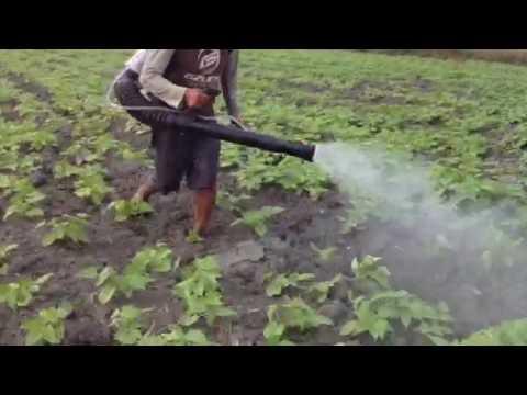 FUMIGADORA PERU AQP CAMANA  CAMPAÑA FRIJOL STIHL – CIFARELLI- HONDA