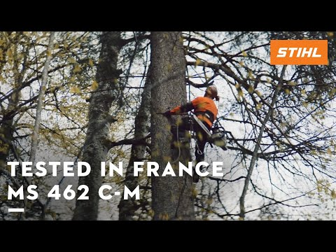 The STIHL MS 462 C-M tested in the forests of France