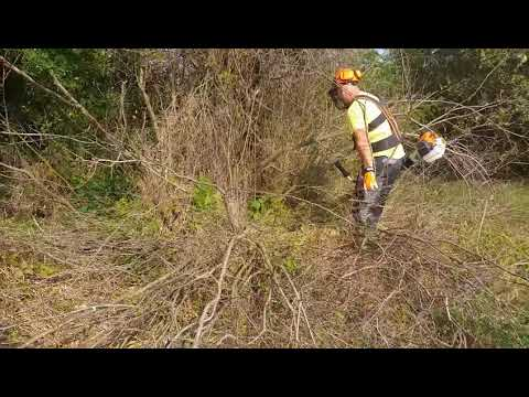 Clearing small trees +16 cm with stihl fs 560 c-em