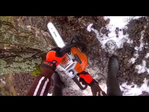 Stihl MS211 chainsaw action from first-person view