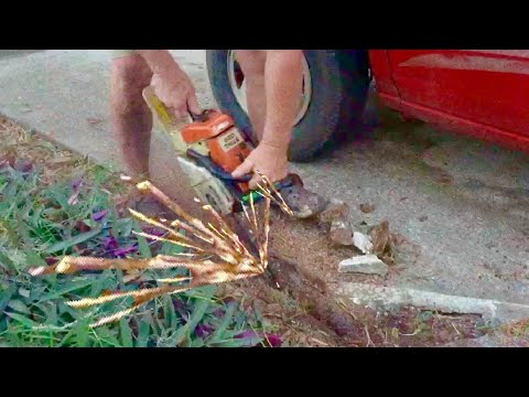 What Not To Do With A Chainsaw Stihl 026