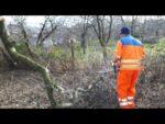 Stihl MS 231 chainsaw logging