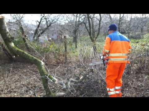 Stihl MS 231 chainsaw logging