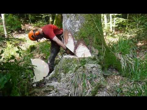 French logging with a Stihl ms 460 stihl-Abattage d'une jolie pesse, moyenne montagne Jura