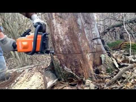 Stihl ms170 cutting wood