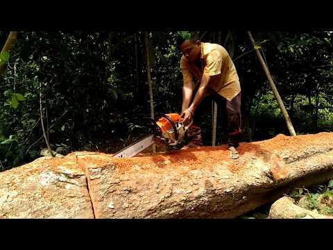 Shin Saw, Stihl Duromatic E, mesin pemotong kayu handal