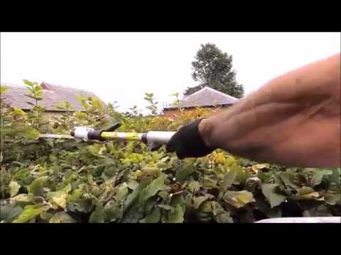 BEECH HEDGE TRIMMING WITH STIHL KM94