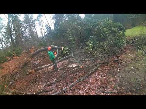 Vlog: Dag zagen met stihl 👌🌳